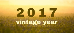 2017 - The Vintage Year | Portwine Portugal